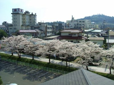 桜並木(4階から).jpg